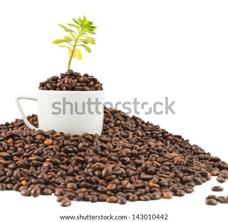 Green plant growing from the cup full of beans in a pile of coffee - stock photo