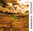 Green plant growing on dry dead earth - stock photo