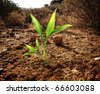 Green plant growing through dry soil - stock photo