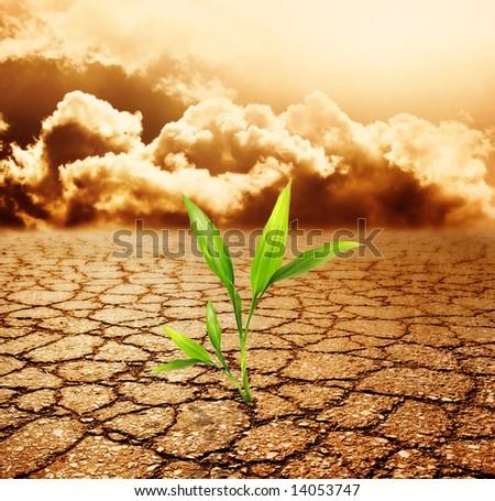 Green plant growing trough dead soil - stock photo