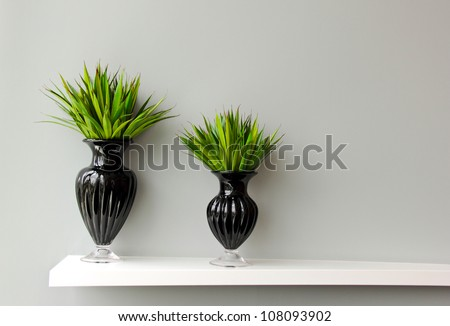 Green plant in black vase decorated for room - stock photo