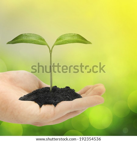 Green plant in hand - stock photo