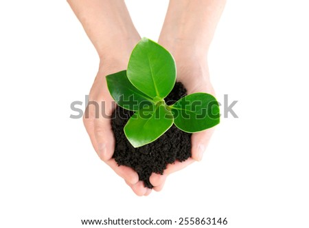 Green plant in hand new life from up - stock photo