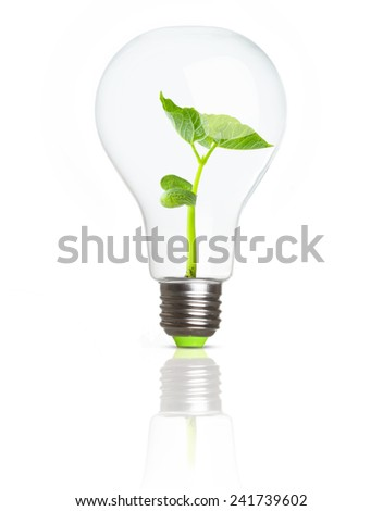 Green plant in soil inside light bulb. Eco concept.