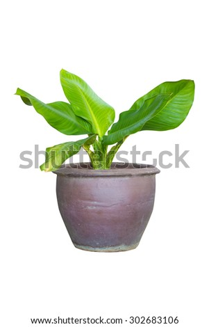 Green plant in terracotta pots isolated on white background - stock photo
