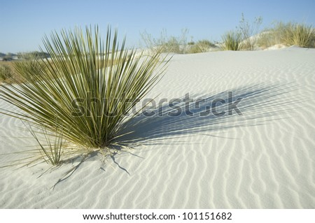 Green plant in white sand dune with dark shadow lines - stock photo