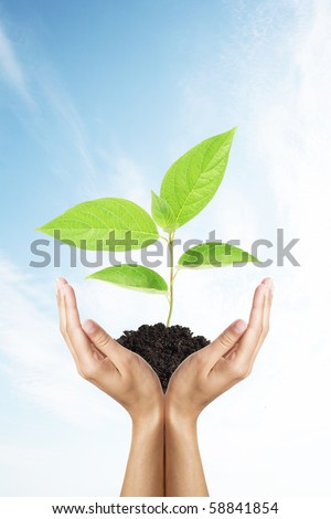 green plant in woman hands over sky - stock photo