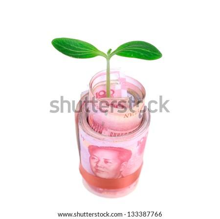 Green plant leaf growing on money, money of china - stock photo