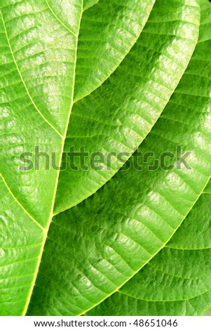 Green plant leave, detail pattern