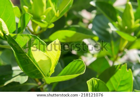 Green  plant leaves with soft warm light in the morning