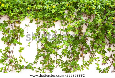 green plant on background wall - stock photo