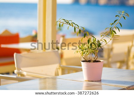 green plant on beach cafe table - stock photo