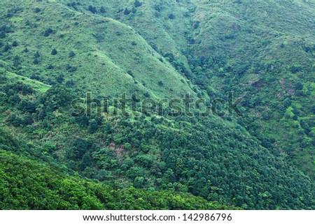 Green plant on Mountain - stock photo