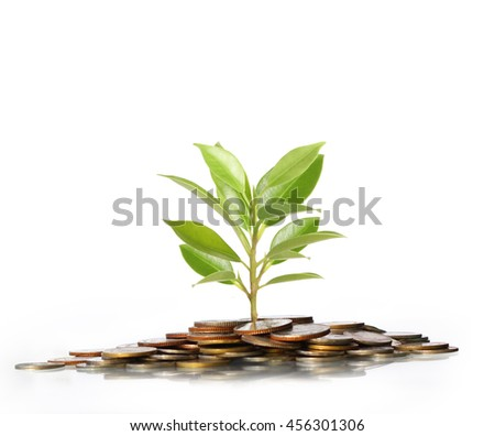 green plant on the gold coins