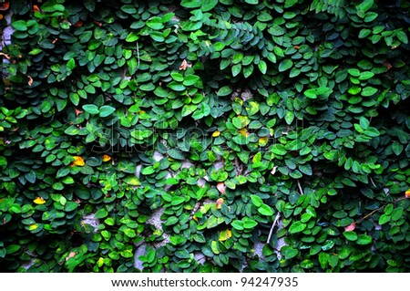 Green plant on the wall - stock photo
