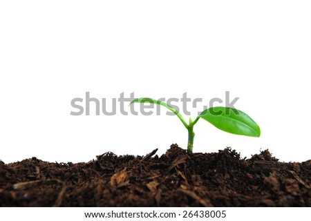 Green plant seedling in earth, white background