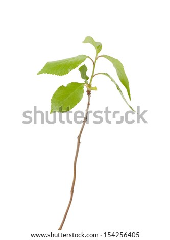 Green plant sprout , isolated on white