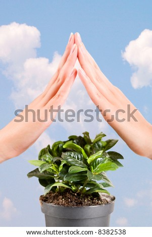 Green plant under the protection of female hands on a background of sky - stock photo