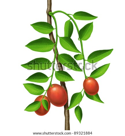 Green plant with red fruits - stock photo
