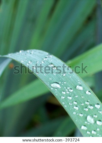 Green plant with water drops - stock photo