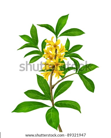 Green plant with yellow flowers - stock photo