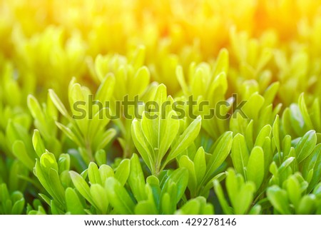 Green plants background, sunny - stock photo