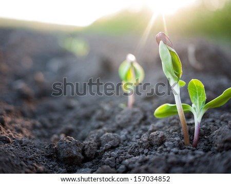 green plants growth - stock photo