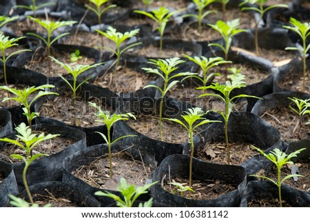 green plants in a house plant - stock photo