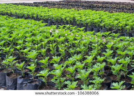 green plants in plant house - stock photo