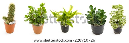 green plants in the small pots isolated on white background - stock photo