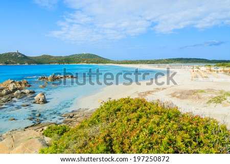 Green plants on rocks at Porto Giunco beach and crystal clear turquoise sea water, Sardinia island, Italy