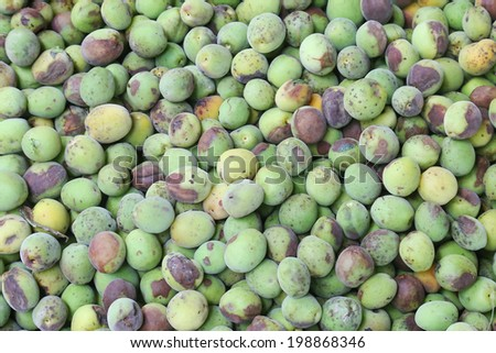 green plum harvest