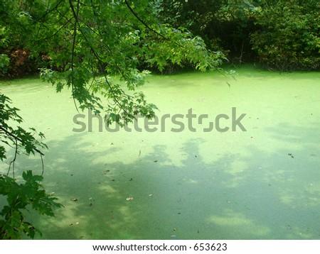 Green Pond - stock photo