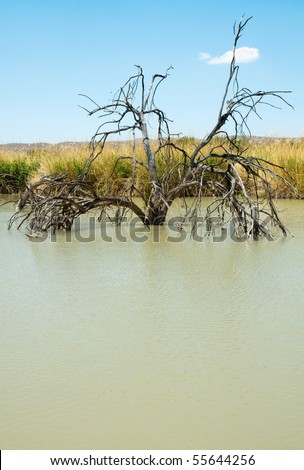 green pond and trees growing in water at Rio Grande Village - stock photo