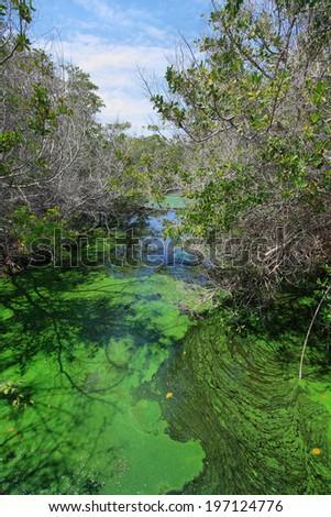 Green puddle and mangroves landscape, Isabela island, Galapagos, Ecuador - stock photo