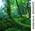 green  rain forest in Olympic Park - stock photo