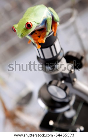 Green red-eyed frog in laboratory, a companion with examines with plants and science - stock photo