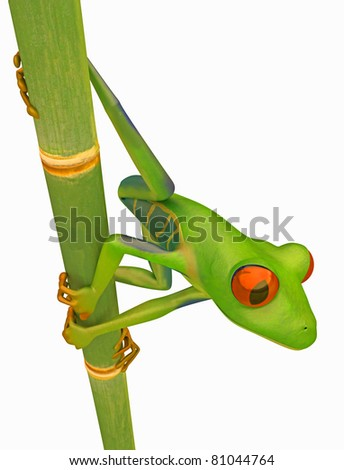 Green Red eyed tree frog on bamboo stem isolated over white