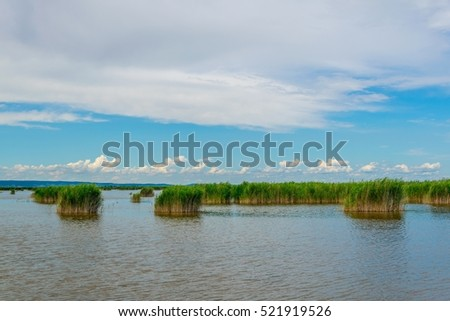 green reed surrounding neusiedlersee in Austria