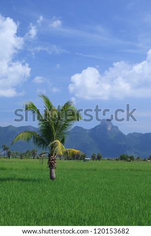 Green rice field and coconut tree in Thailand
