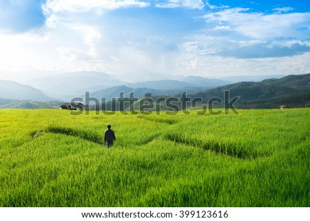 Green rice field, Chiang Mai province, Thailand