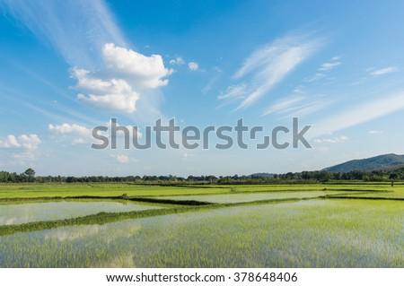 green rice field with sky and cloud in thailand - stock photo