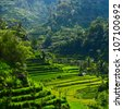 Green rice fields on Bali island - stock photo