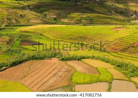 Green Rice fields on hills in central Madagascar on a sunny day - stock photo