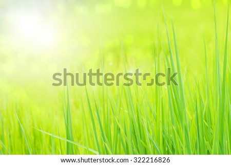 Green Rice pattern background