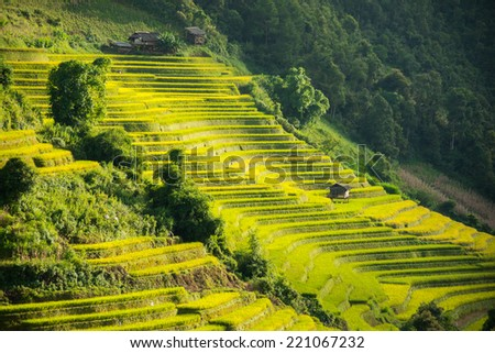 Green rice terrace in the mountain in South East Asia - stock photo