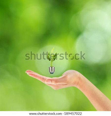 Green rising sprout growing out of a bulb on woman hand, Green energy concept, New life concept. - stock photo