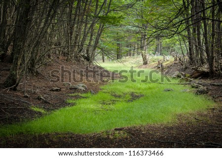 Green road in the forest - stock photo