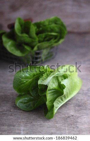 green romaine lettuce, cos - stock photo