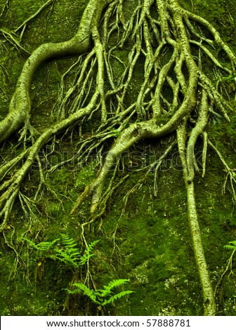 Green roots growing over rock - stock photo